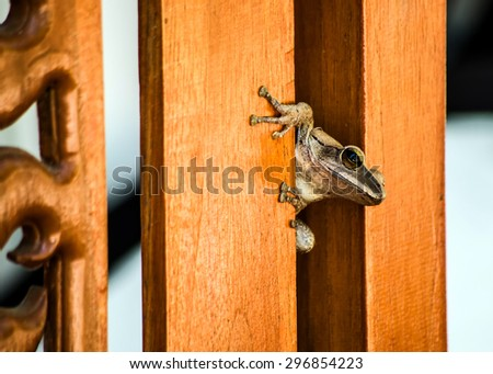 frog on chair - stock photo