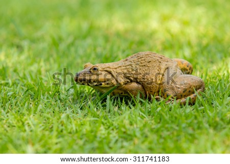 Frog on the green grass. - stock photo