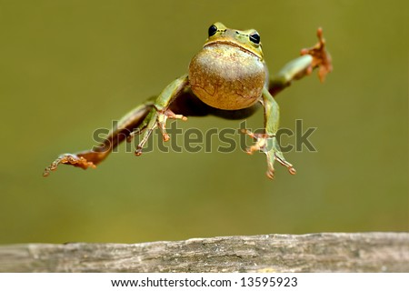 Frog peeking out from behind - stock photo