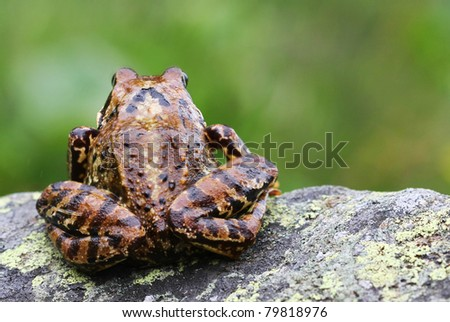 frog sitting on a rock - stock photo