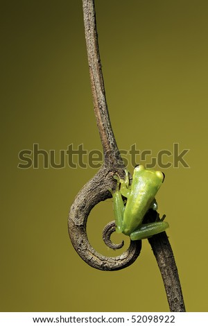 frog sitting on a twig with curled spine - stock photo