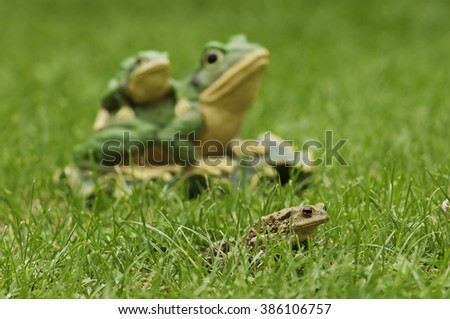Frogs in the grass - stock photo