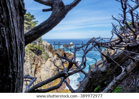 From a secret shadowed location you see Carmel Bay, through dried and twisted Cypress tree branches, blue sea & sky, & unusual rock and geological formations at Point Lobos State Natural Reserve. - stock photo