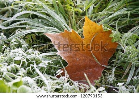 From autumn to winter - stock photo