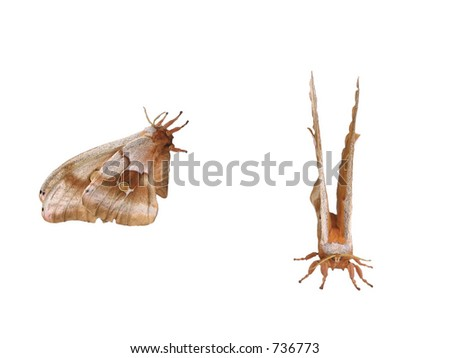 Front and side view of a moth. - stock photo
