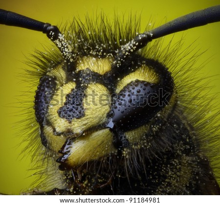 Front on highly magnified profile of a common wasp - stock photo