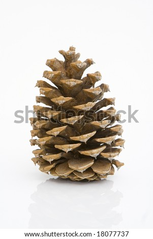 front view of a pine cone isolated against white background - stock photo