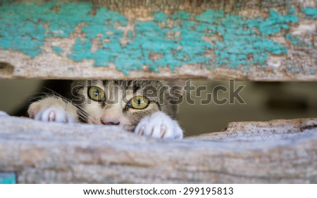 Front view of kitty through old wooden door hole - stock photo