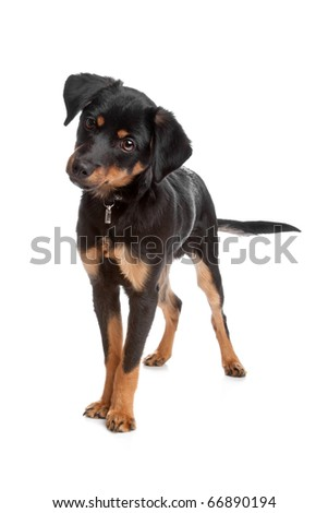 Front view of mixed breed puppy standing, isolated on a white background - stock photo
