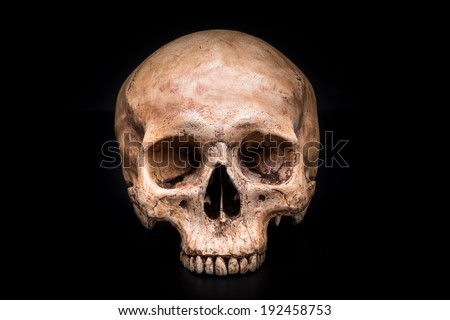 frontview of human skull on isolated black background - stock photo