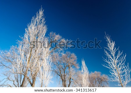 Frost covered branches on trees in the middle of winter against a steel blue sky. - stock photo
