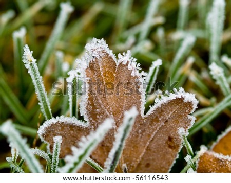 Frost Covered Leaves on a Grassy Background - stock photo
