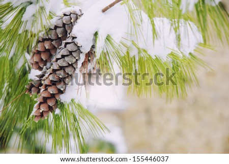 Frost Covered Spruce Tree Branches with Two Pine Cones  - stock photo