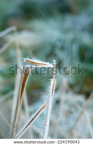 Frost covered stems - stock photo