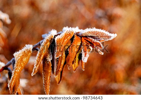frost on a tree stick, close-up - stock photo