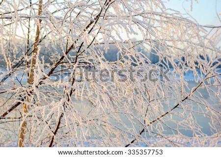 Frost on the trees, rime on the branches in winter, icicles in the sun, winter landscapes, snowy morning in the forest, fairy forest. - stock photo