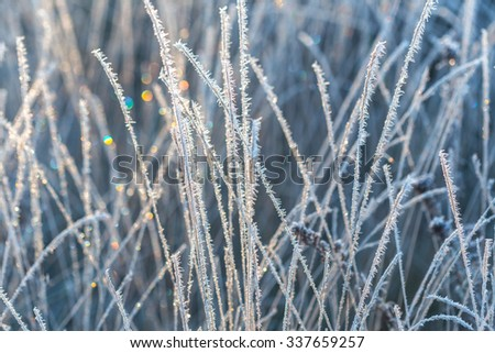 frosted grass - stock photo