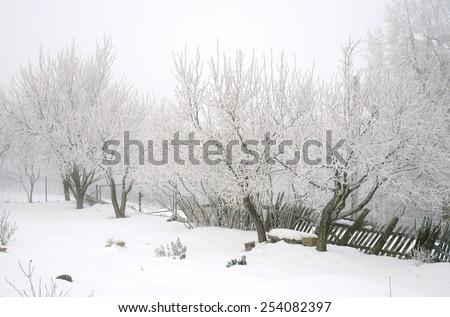 Frosted tree fruit in the winter garden. Country garden in winter during  cloudy day. - stock photo