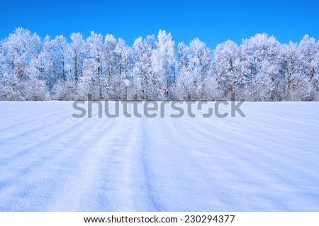 Frosted trees against a blue sky - stock photo