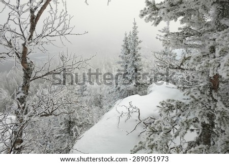 Frosted trees on the edge of the rock covered by snow in a winter cloudy day in South Urals mountains, Russia. - stock photo