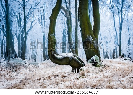 Frosty forest in cold winter day - stock photo