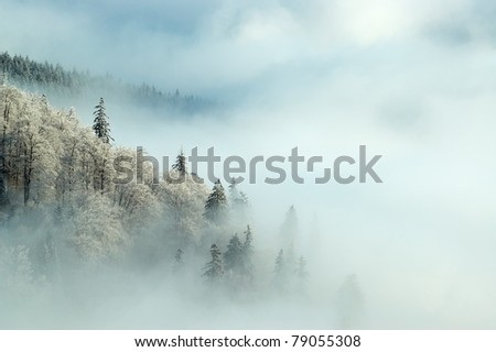 frosty morning forest - stock photo