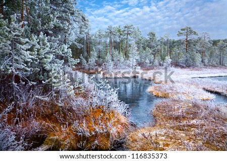Frosty morning next to the forest lake. - stock photo
