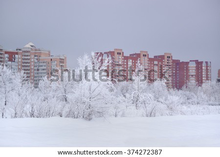 Frosty trees  - stock photo