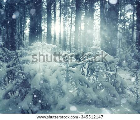 frosty winter landscape in snowy forest - stock photo