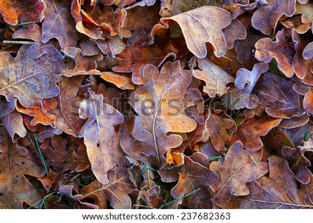 frozen autumn leafs-  abstract natural background - stock photo