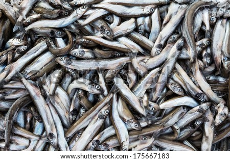frozen carcass fish in brick for trade and background - stock photo