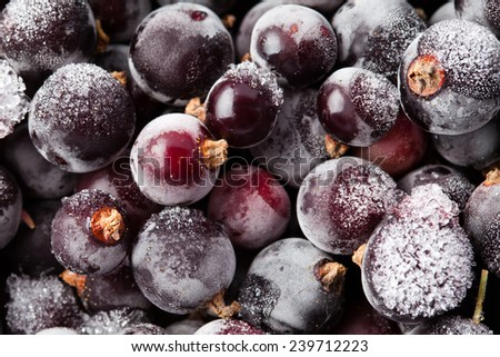 Frozen currant. blueberries. Closeup. Macro. Ice. Abstract. - stock photo