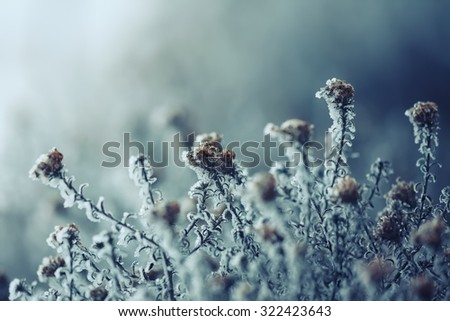 frozen flowers. frost on flowers. Group of flowers - stock photo