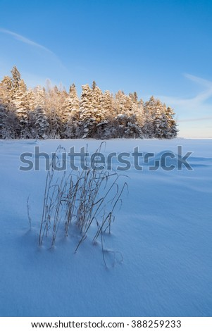 Frozen hay at lake shore and snow covered forest - stock photo