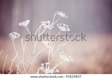 Frozen ice covered flower on a cold foggy winter day - stock photo