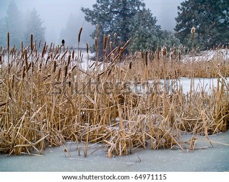 Frozen Marsh Area on an Overcast Day - stock photo