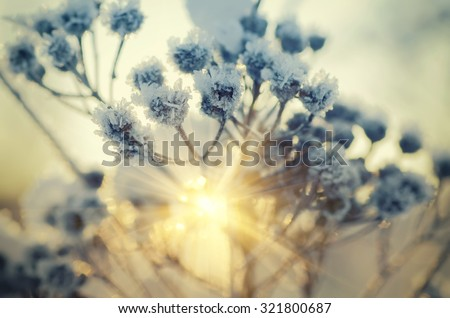 Frozen meadow plant, natural vintage winter  background, macro image with sun shining - stock photo