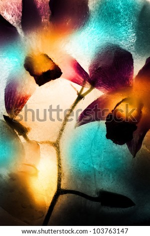 frozen orchid flowers in a piece of ice with a yellow and dark blue patch of light - stock photo