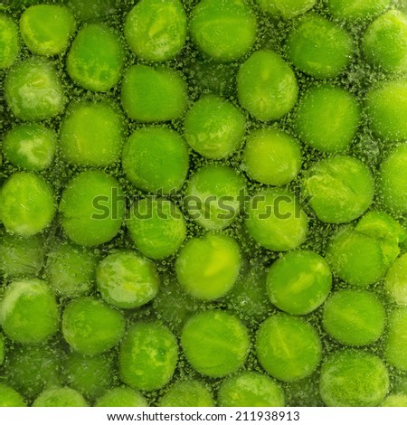 Frozen peas in a block of ice - stock photo