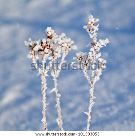 frozen plants with snow crystals - stock photo