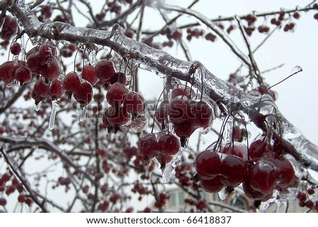 Frozen Red Berry Bunches - stock photo