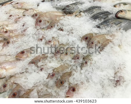 Frozen Red snapper fish, displayed on ice in the supermarket. - stock photo