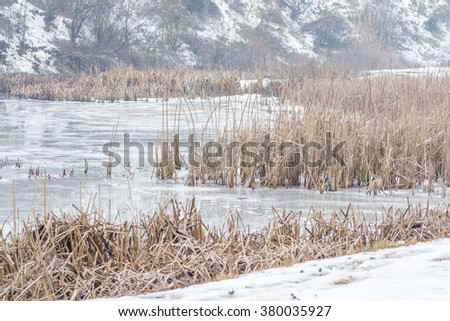 Frozen reeds over icy lake. Static imagine with snowy winter landscape and dry frozen reeds on the shoreline. - stock photo