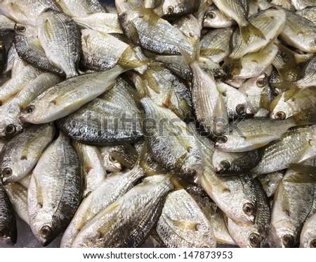 Frozen small fish on ice - stock photo