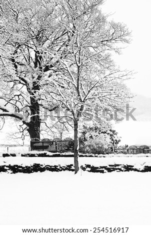 Frozen snowy trees with icy twigs and branches in freezing winter landscape - stock photo