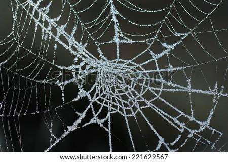 Frozen spider web - stock photo