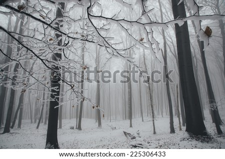 frozen tree branches and snow in forest in winter - stock photo