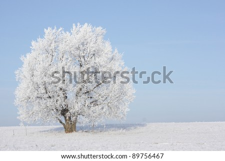 Frozen tree in field with blue sky on the background. No any post-processing - stock photo