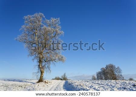 Frozen tree on winter field and blue sky in north Poland/Frozen tree on winter field - stock photo