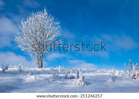 Frozen tree on winter field, low perspective. - stock photo